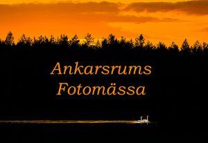 2013-08-20 Larver och sångsvanar autokorr, ljusare, 600 px